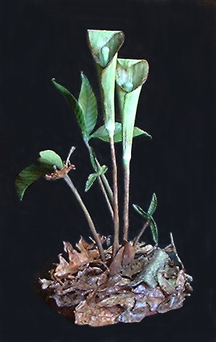 jack in the pulpit leather wildflower sculpture